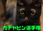 C0132438_22412349_2