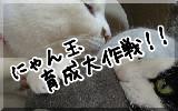 Nyantama_banner